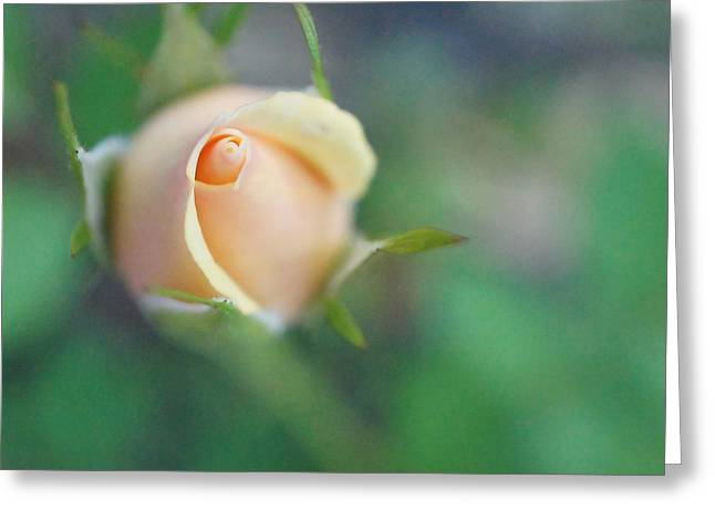 Greeting Card featuring the photograph Hazy Rosebud Squared by TK Goforth