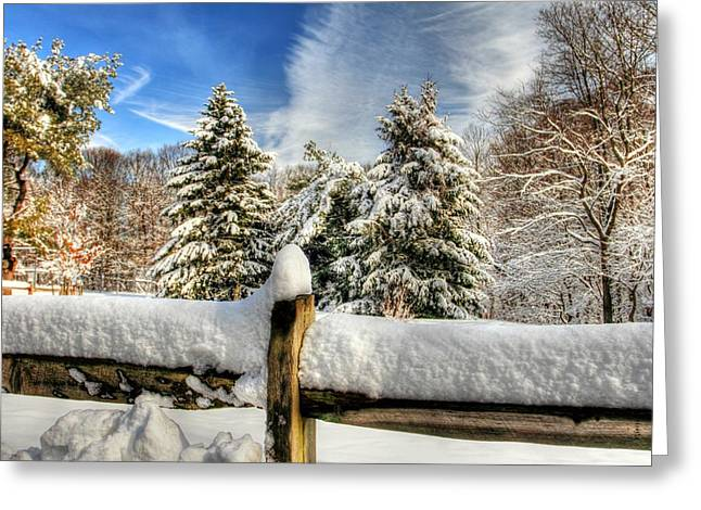 Hdr Of Three Trees Greeting Card