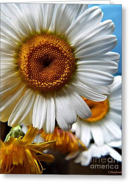 He Loves Me Greeting Card by Christy Ricafrente