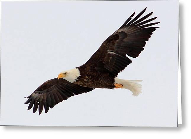 He Will Raise You Up On Eagle's Wings... Greeting Card