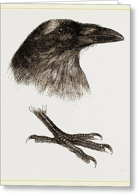 Head And Foot Of Raven Greeting Card