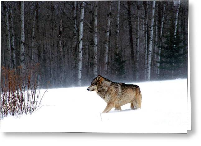 Head For Cover Greeting Card by Robert Kleppin
