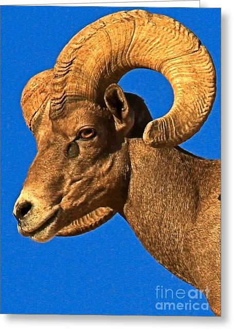 Head Of A Big Horn Greeting Card by Adam Jewell