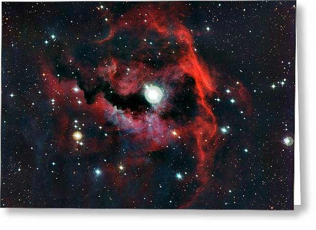 Head Of Seagull Nebula Greeting Card