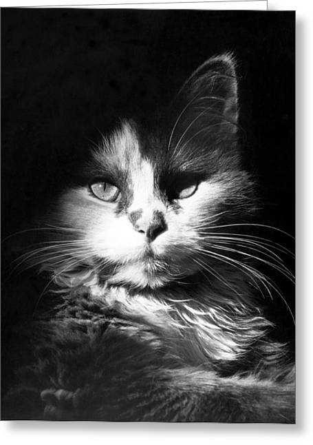 Head Shot Of Black & White Cat Greeting Card