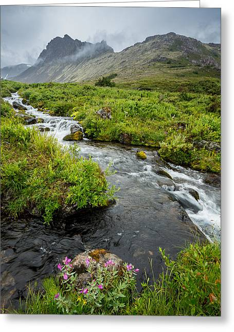 Headwaters In Summer Greeting Card