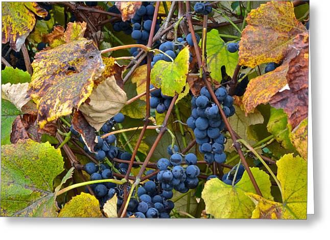 Heard It Through The Grape Vine Greeting Card by Starving  Artist