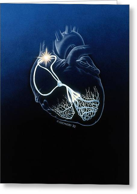 Heart Conduction System Greeting Card by Bob L. Shepherd