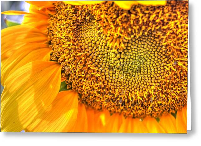 Heart-felt Sunflower Greeting Card