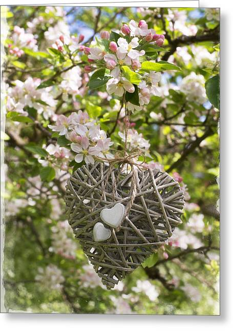 Heart In Blossom Greeting Card by Amanda Elwell