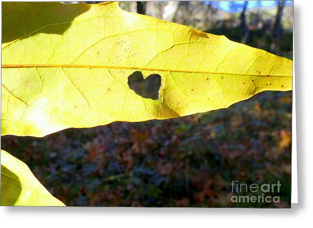 Heart Leaf Greeting Card by Marlene Rose Besso