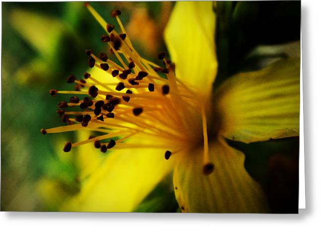 Greeting Card featuring the photograph Heart Of A Flower by Zinvolle Art