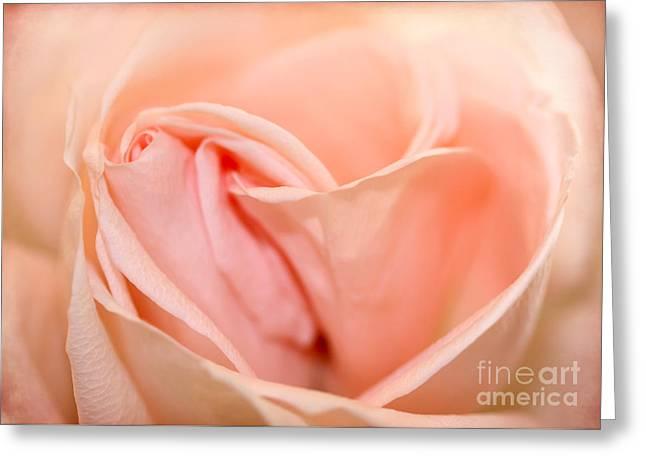 Heart Of A Peach Rose Greeting Card by Sabrina L Ryan