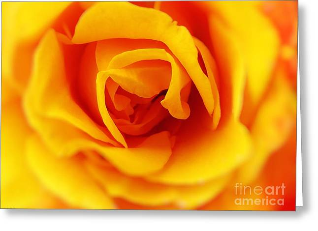 Heart Of A Rose Greeting Card by Ella Kaye Dickey