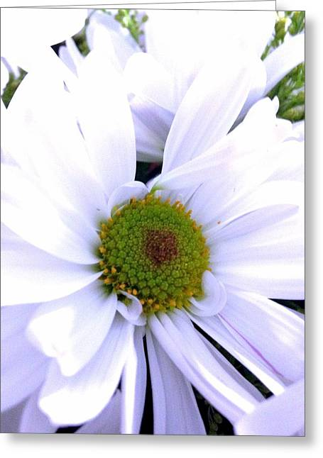 Heart Of The Daisy Greeting Card