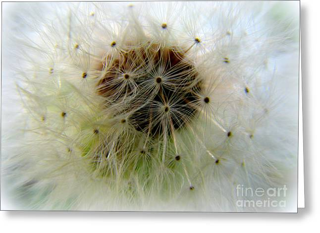 Heart Of The Dandilion Greeting Card