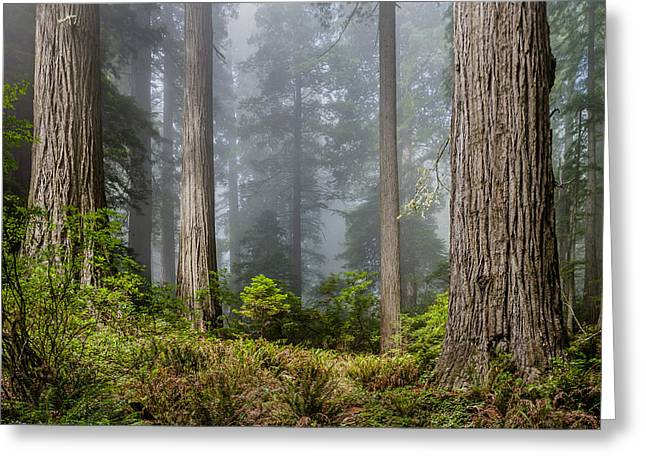Heart Of The Forest Greeting Card by Greg Nyquist