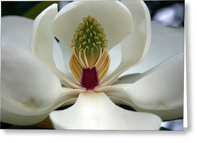 Greeting Card featuring the photograph Heart Of The Magnolia by Andy Lawless