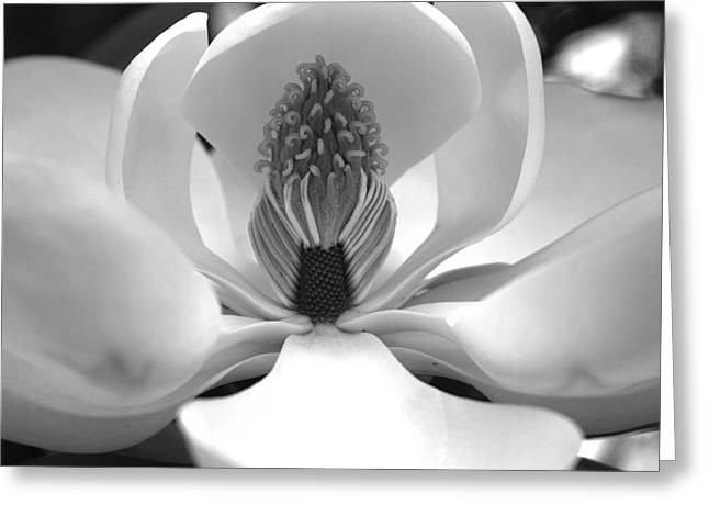 Heart Of The Magnolia Black And White Greeting Card