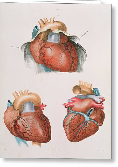 Heart Greeting Card by Sheila Terry/science Photo Library