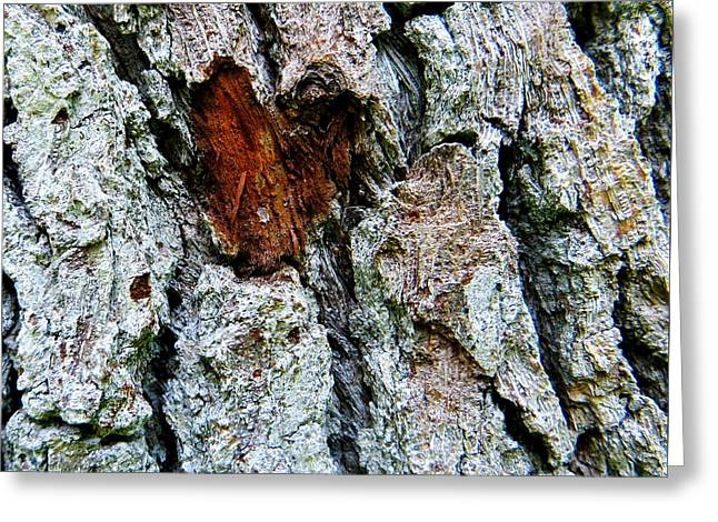 Heart Wood Greeting Card by Joy Hardee