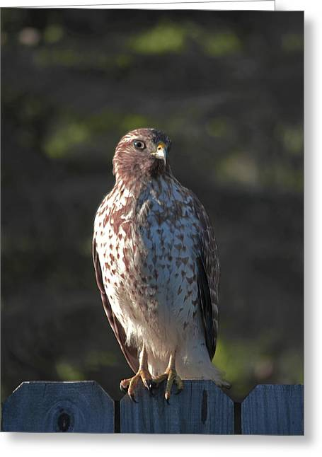 Heartful Hawk Greeting Card by DigiArt Diaries by Vicky B Fuller