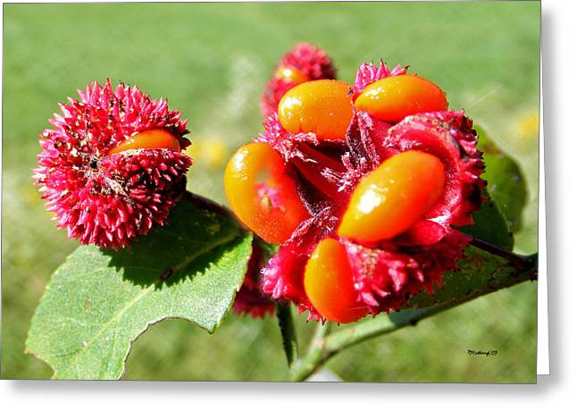 Hearts-a-bursting Seed Pods Greeting Card by Duane McCullough