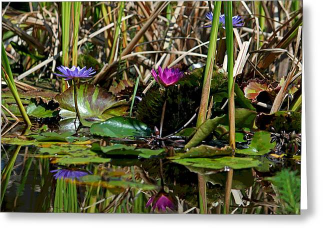 Heat Of The Afternoon - Down At The Lily Pond Iv Greeting Card