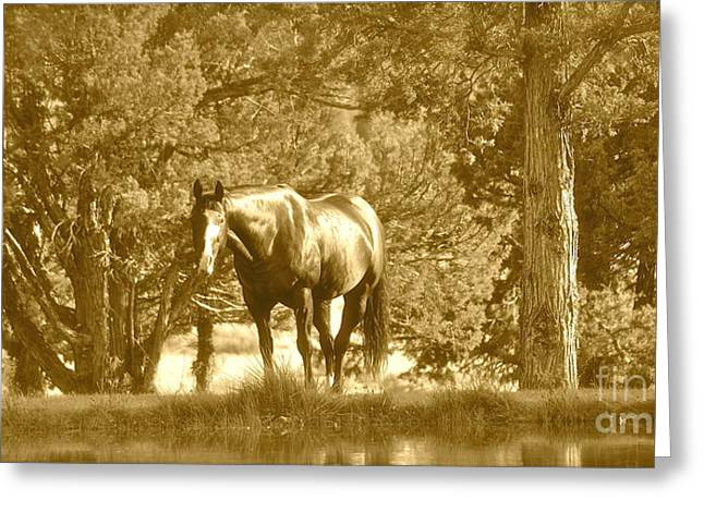 Greeting Card featuring the photograph Heaven On Earth by Barbara Dudley