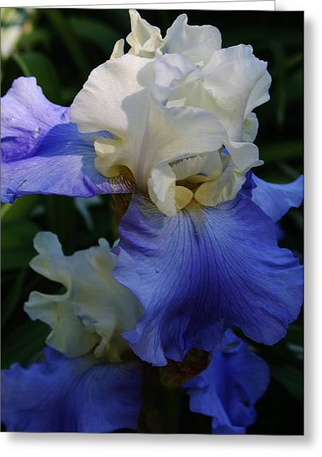 Heavenly Blue Greeting Card by Bruce Bley