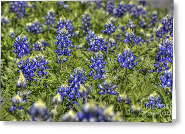 Heavenly Bluebonnets Greeting Card