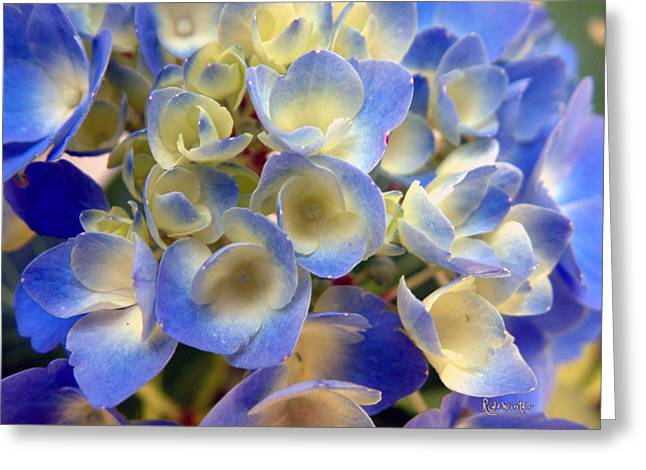 Heavenly Blues Greeting Card by RC deWinter