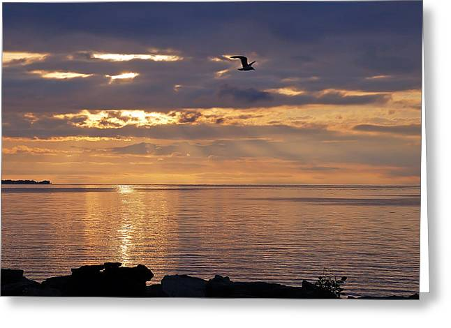 Heavenly Flight Greeting Card by Aimee L Maher Photography and Art Visit ALMGallerydotcom