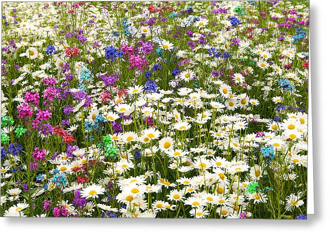 Greeting Card featuring the photograph Heavenly Flower Bed by Larry Landolfi