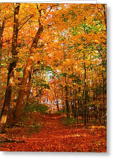 Heavenly Pathway Greeting Card by James Hammen