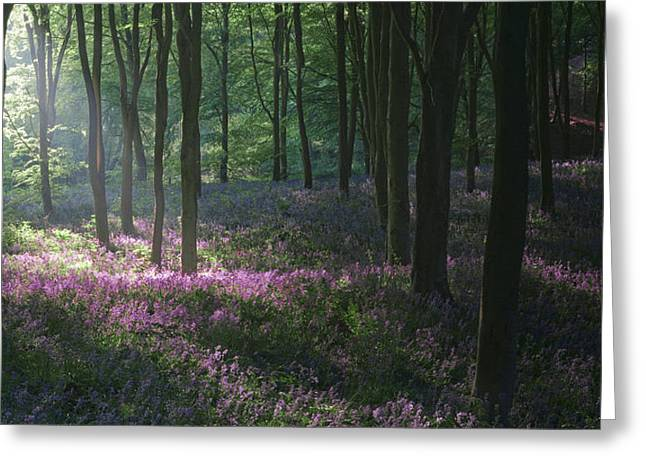 Heaven's Garden Greeting Card by John Chivers