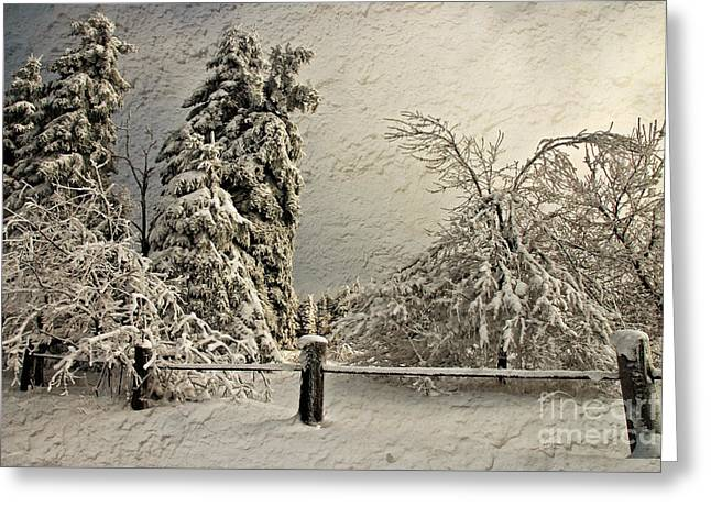 Heavy Laden Blizzard Greeting Card by Lois Bryan