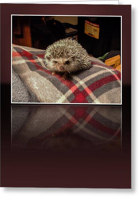 Hedgehog 5 Greeting Card by Photographic Art by Russel Ray Photos