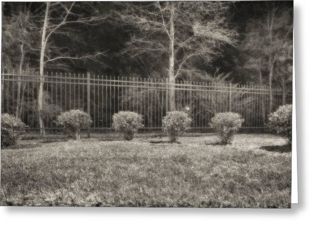 Hedges And Trees Greeting Card by J Riley Johnson