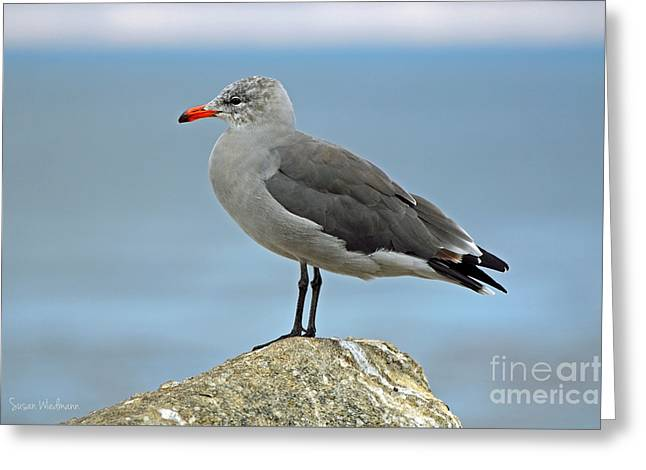 Heermann's Gull In Profile Greeting Card