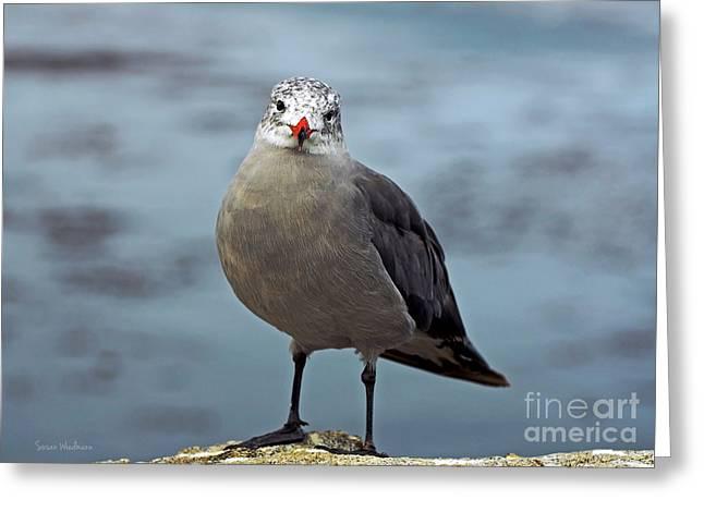 Heermann's Gull Looking At Camera Greeting Card