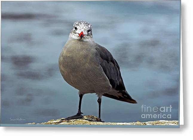 Heermann's Gull Looking At Camera Greeting Card