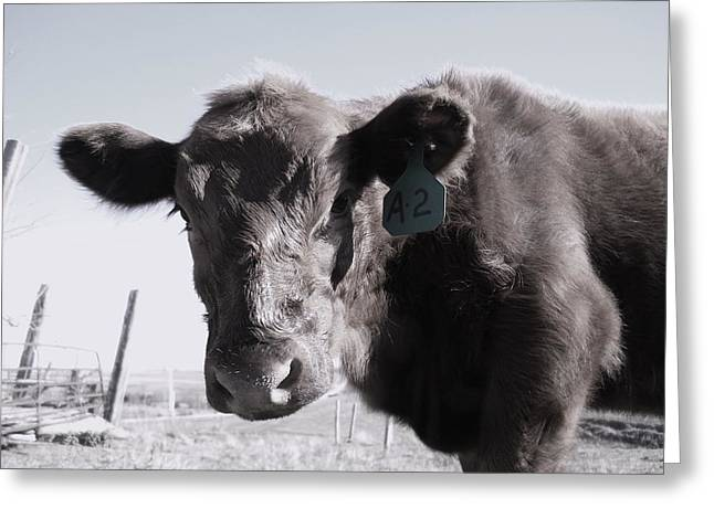 Heifer Greeting Card by J L Zarek