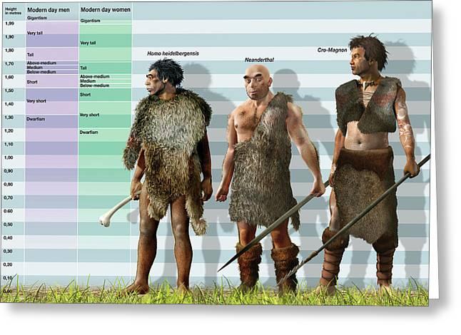 Height Variation In Pleistocene Hominids Greeting Card by Jose Antonio Pe�as