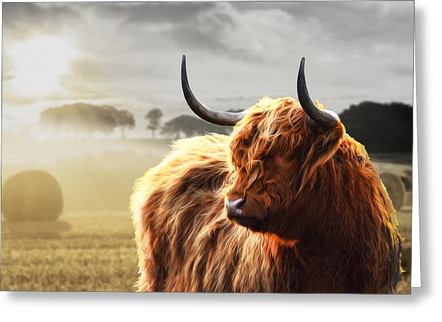 Heilan Coo On Fire Greeting Card