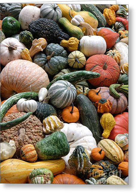 Heirloom Squash Tower V. Greeting Card by Vinnie Oakes
