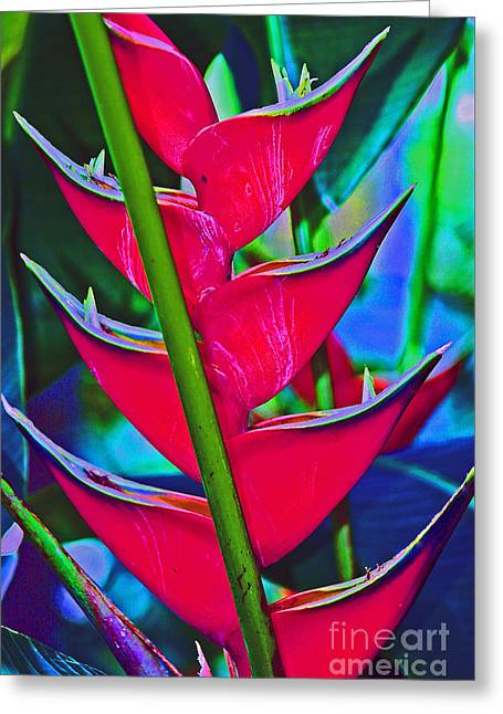 Heliconia Abstract Greeting Card
