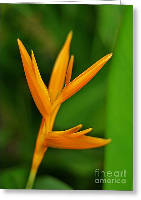 Heliconia Photo Greeting Card