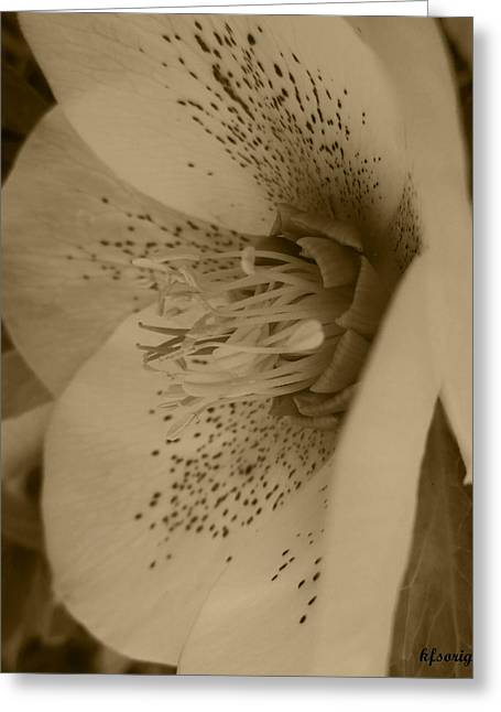 Helle 5 Greeting Card by Kathy Spall