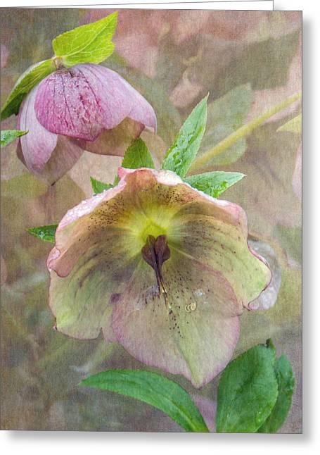 Hellebore Flower Greeting Card by Angie Vogel